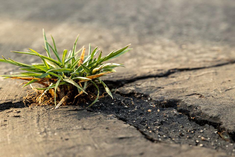 Grass growing between cement cracks in sidewalk