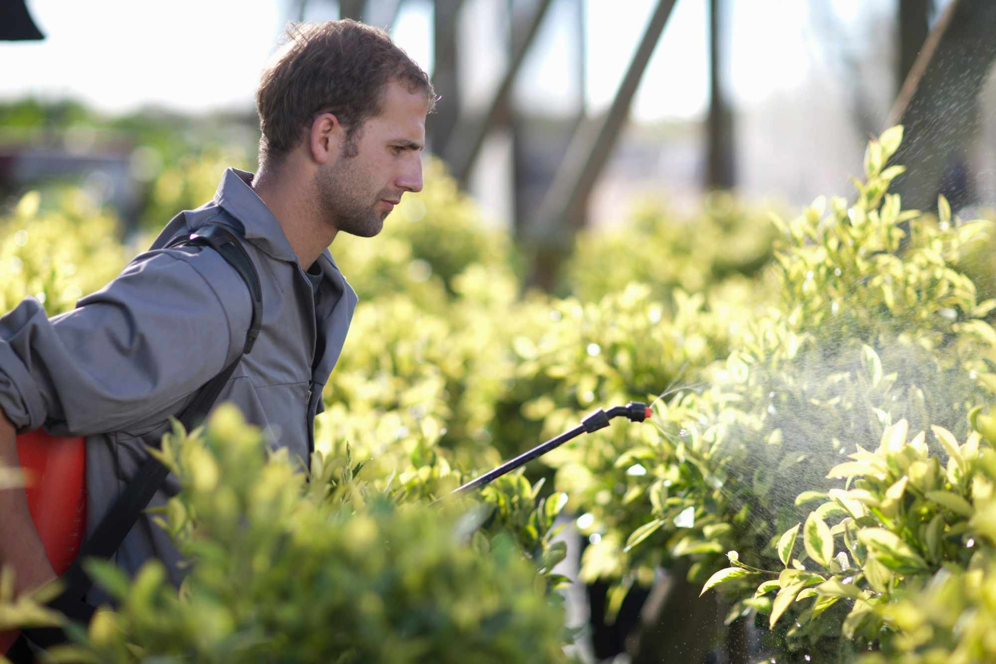 Young man spraying plants in a nursery.