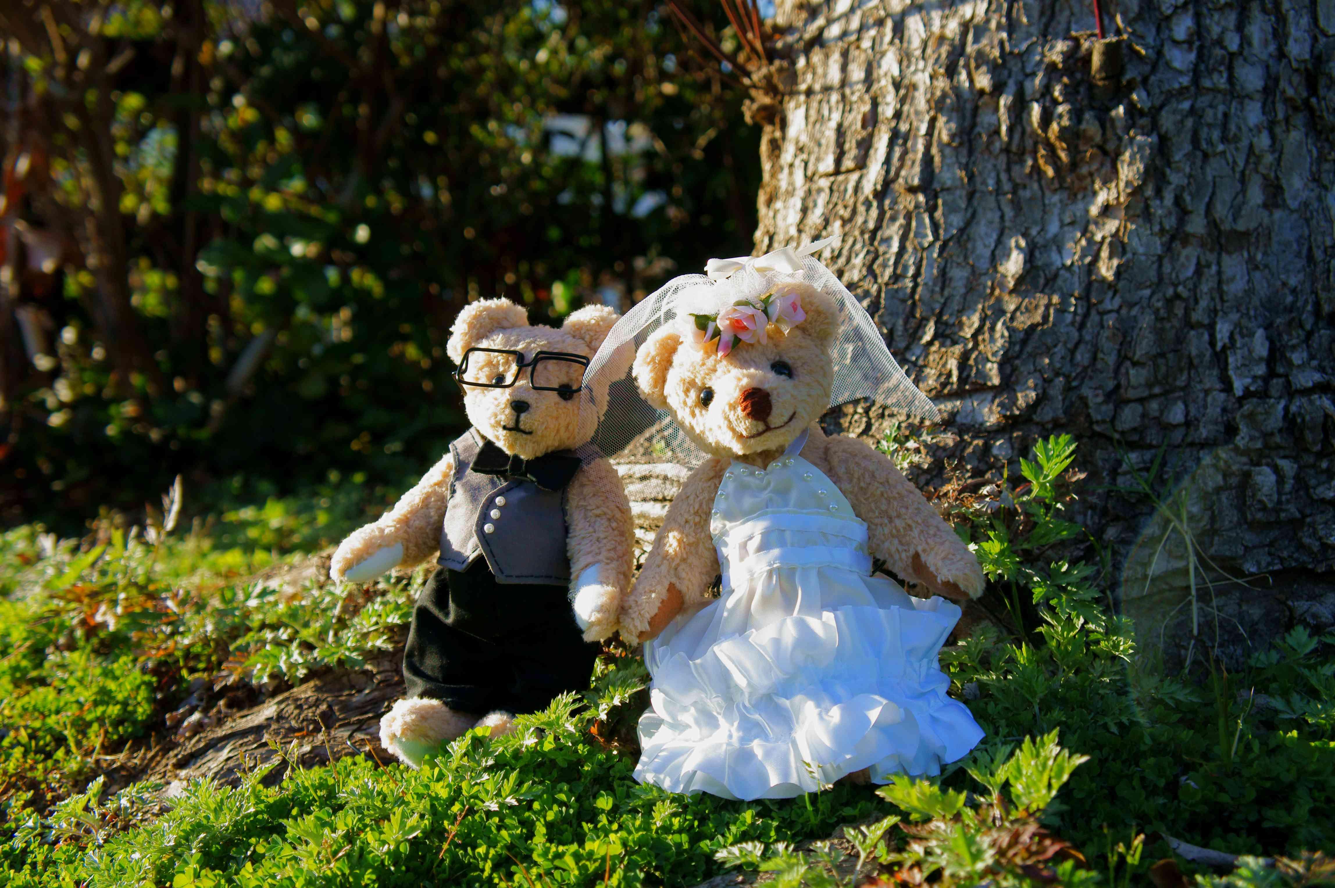 Bear's wedding ceremony