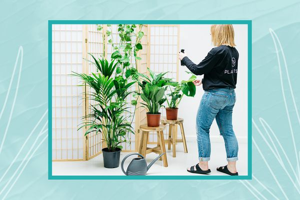taking care of plants with plant sitter, Plant Sit