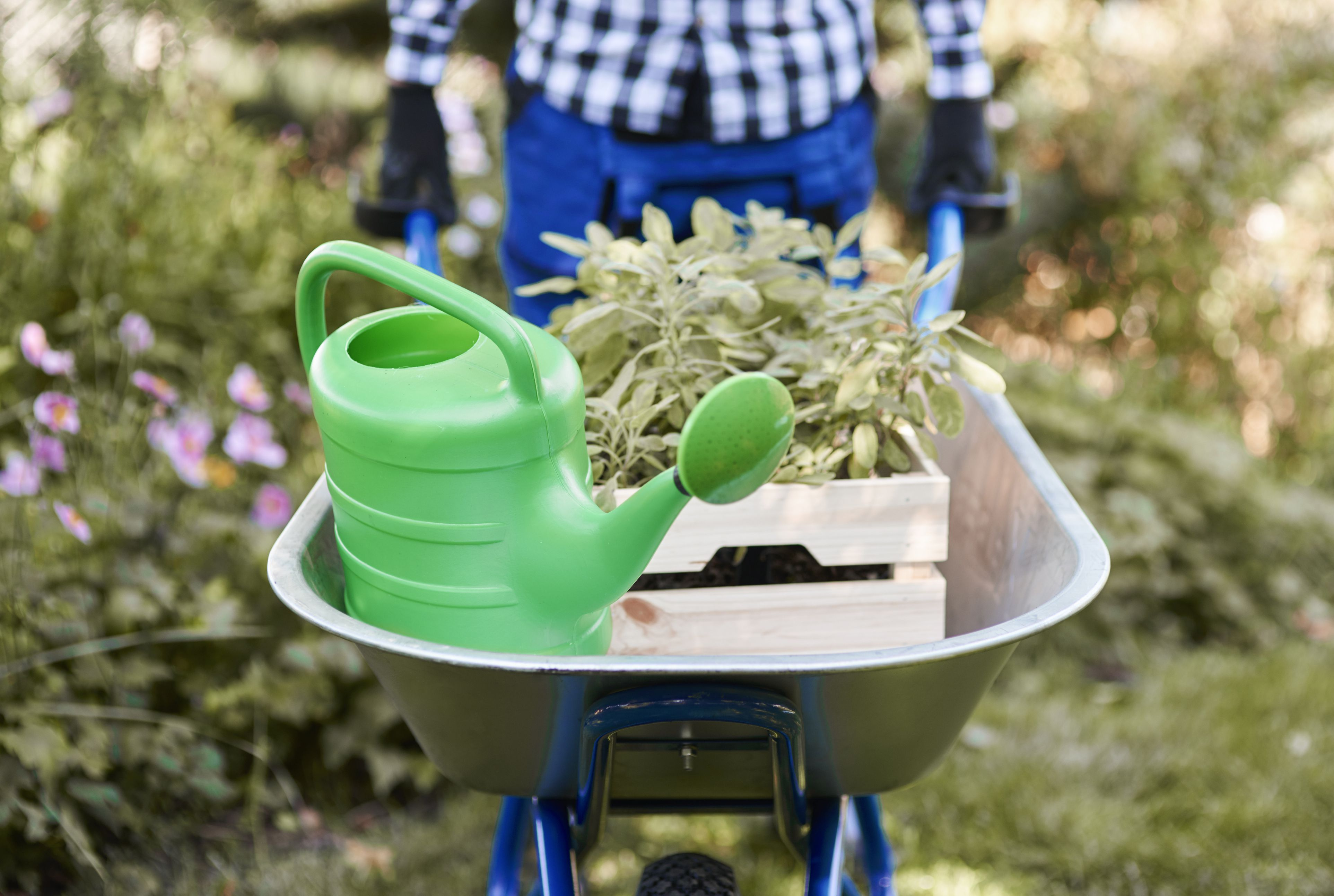 The 8 Best Watering Cans of 2020 Watering Cans Fun For House Plants on watering plants inside, sprinklers for house plants, accessories for house plants, watering plants with soda, self watering plants, watering can watering plants, leaves for house plants, sink hose for watering plants, water plants, watering globes for indoor plants, watering sticks for plants, vacation watering system for plants, bedroom decorating with plants, baskets for house plants, drip irrigation for house plants, hand watering plants, man watering plants, watering plants with milk jugs, metal watering can for plants,