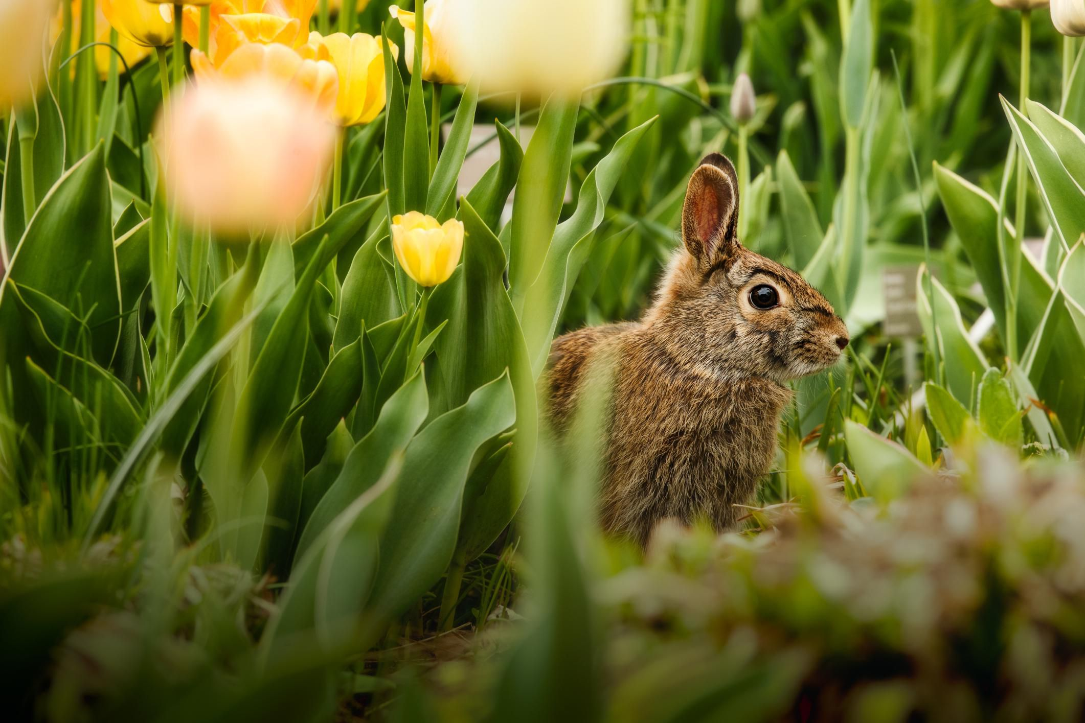 3 ways to keep rabbits out of your garden - How to keep rabbits out of garden ...