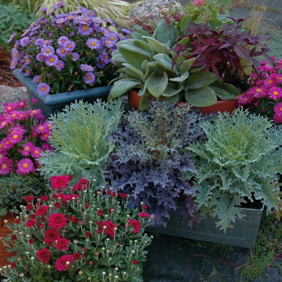 grouping of fall container gardens