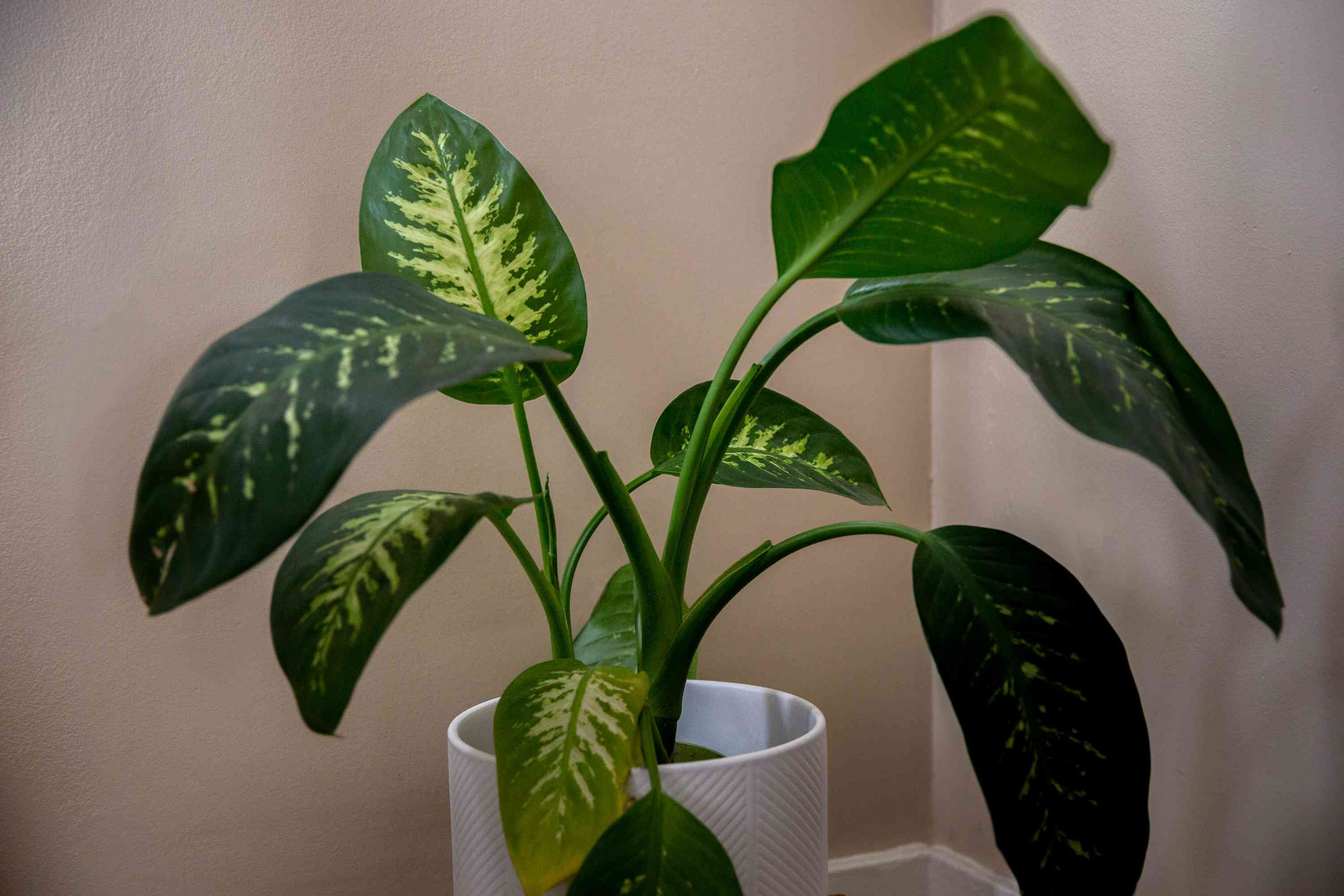 6 Common Causes For Yellowing Leaves On Houseplants