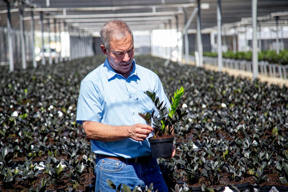 Mike Rimland from Costa Farms inspecting a plant