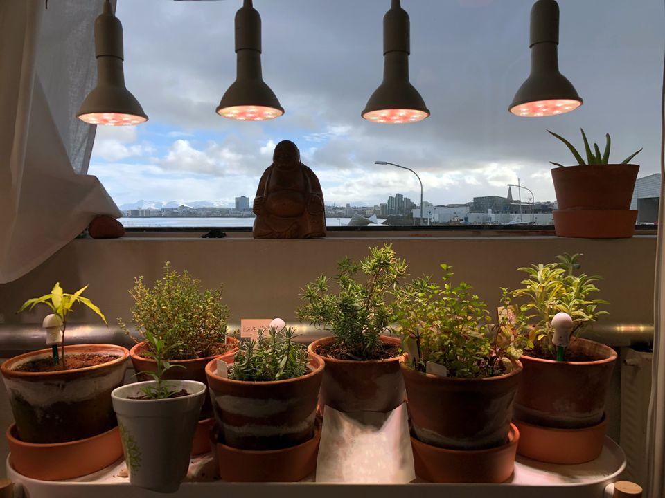 Indoor garden with grow lights