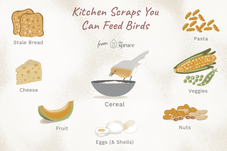 Kitchen Ss Birds Eat