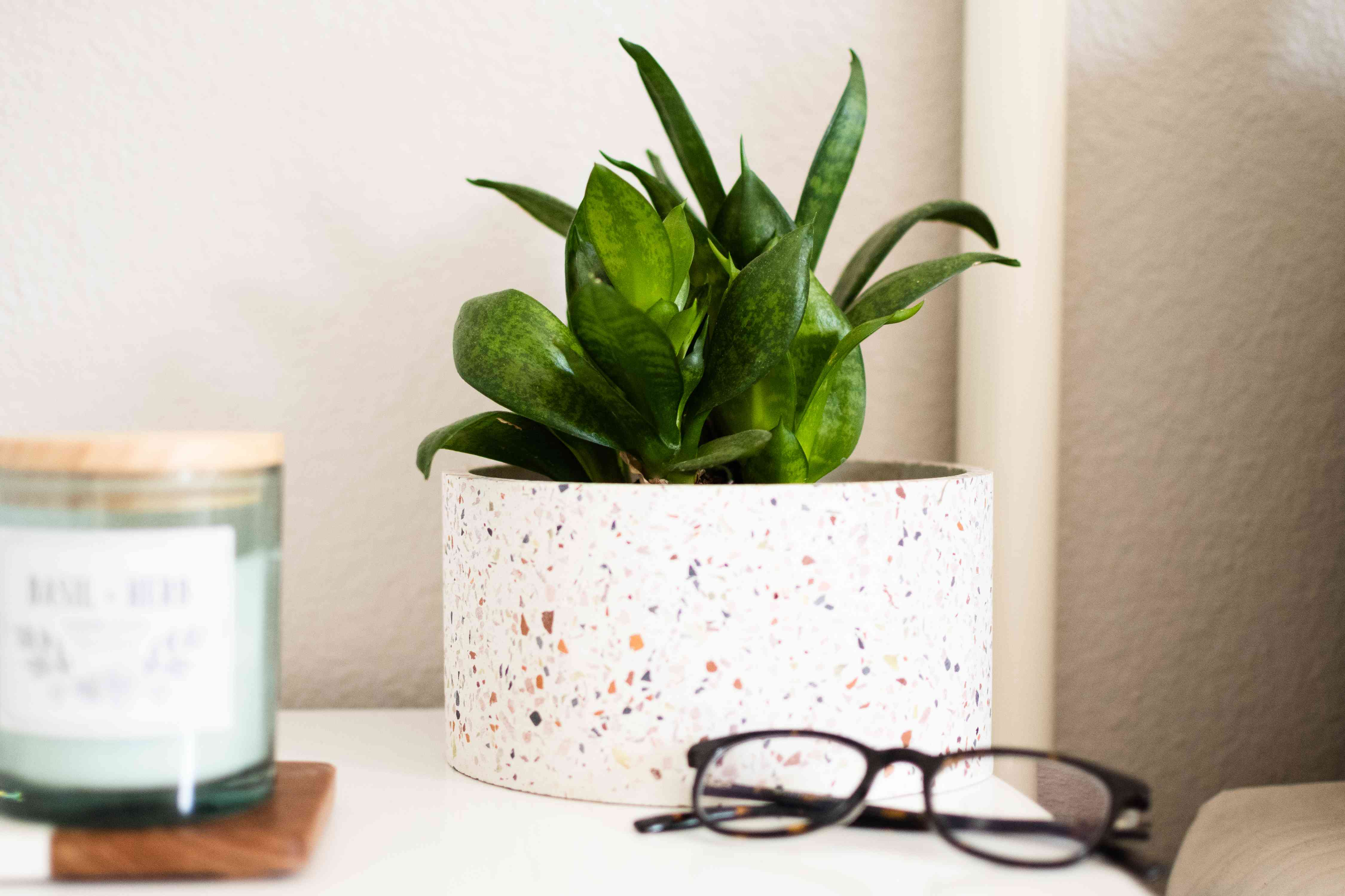 Small houseplant on nightstand next to candle and black eyeglasses