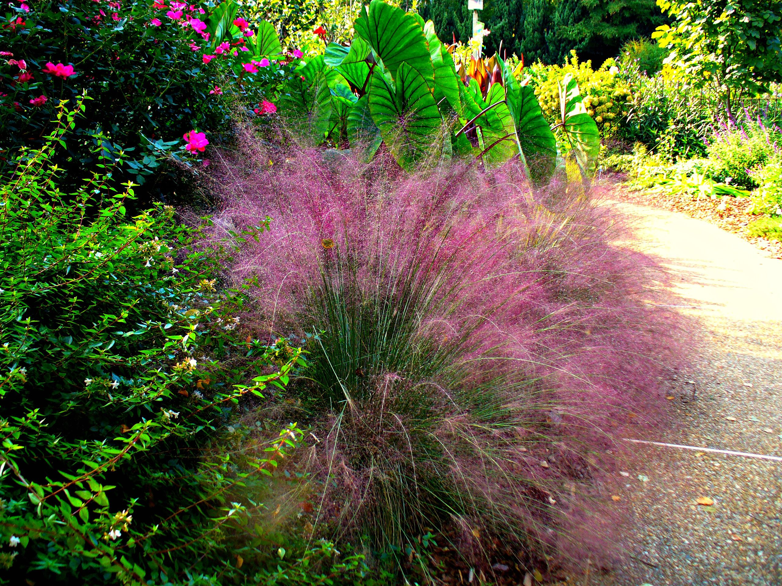 12 Best Ornamental Grasses For Your Landscape