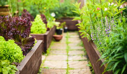 Vegetable garden with raised beds