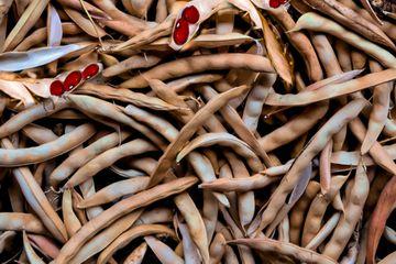 dried bean pods