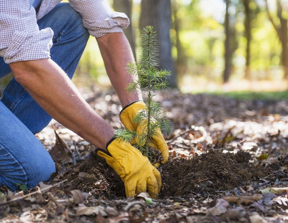 person planting a tree seedling