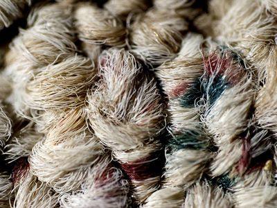 natural fibers can be harvested from