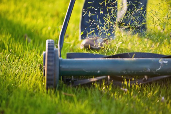 Grass clippings as lawn multch
