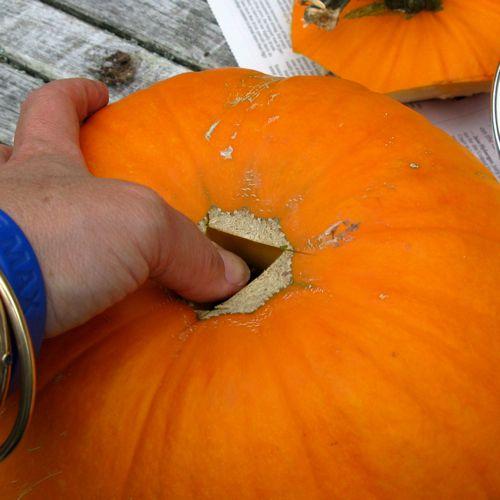 pumpkin with drainage hole