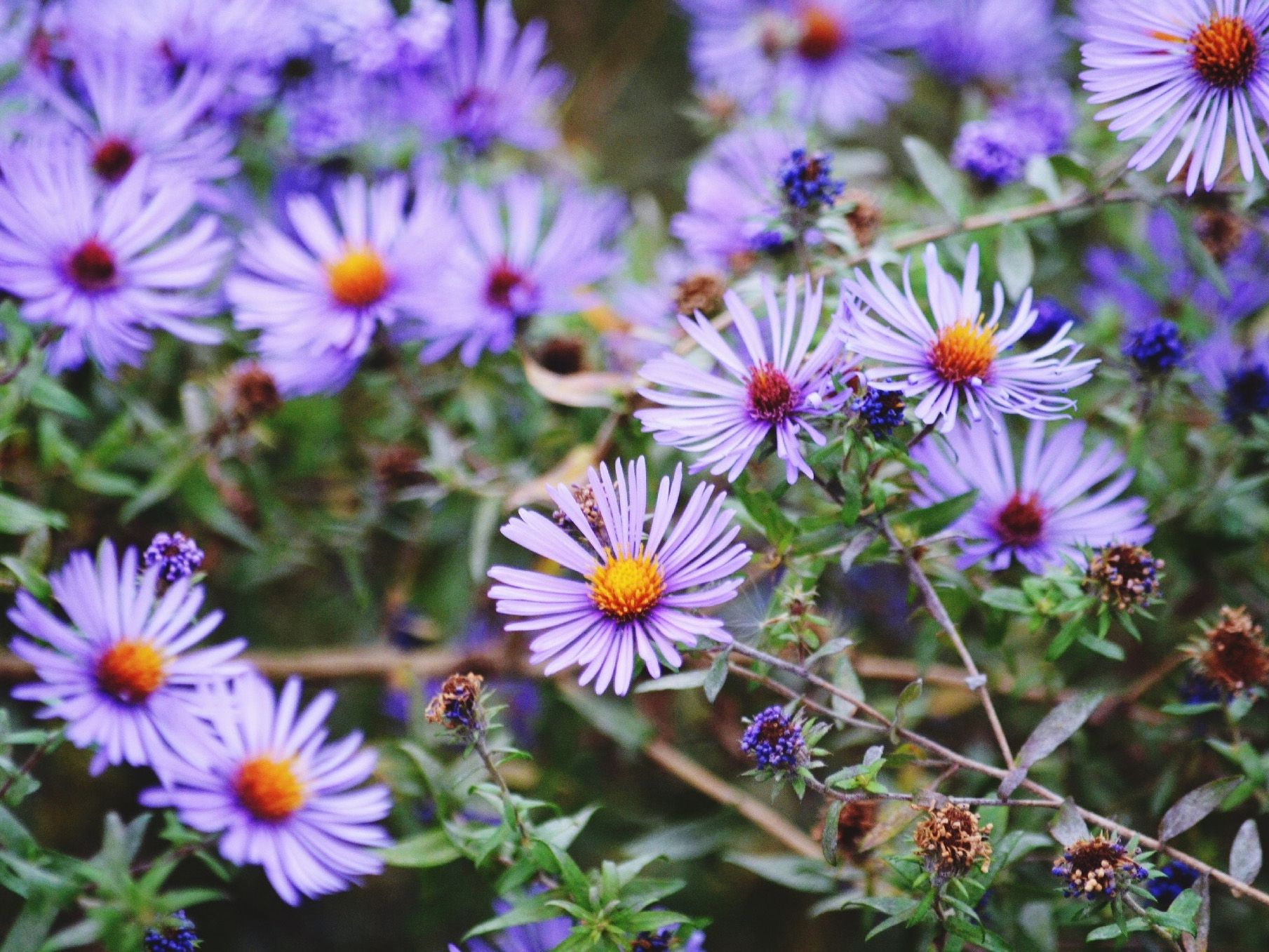 Plants That Can Cause Skin Irritations
