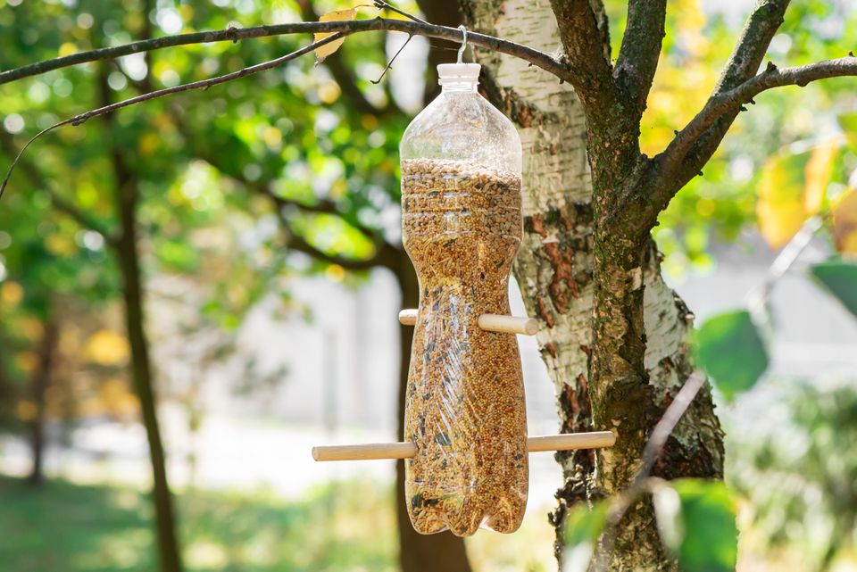 bird feeder made from a plastic bottle