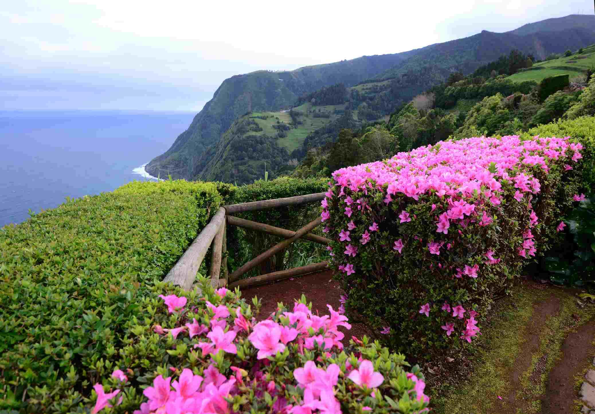 Best shrubs with pink or magenta flowers mightylinksfo