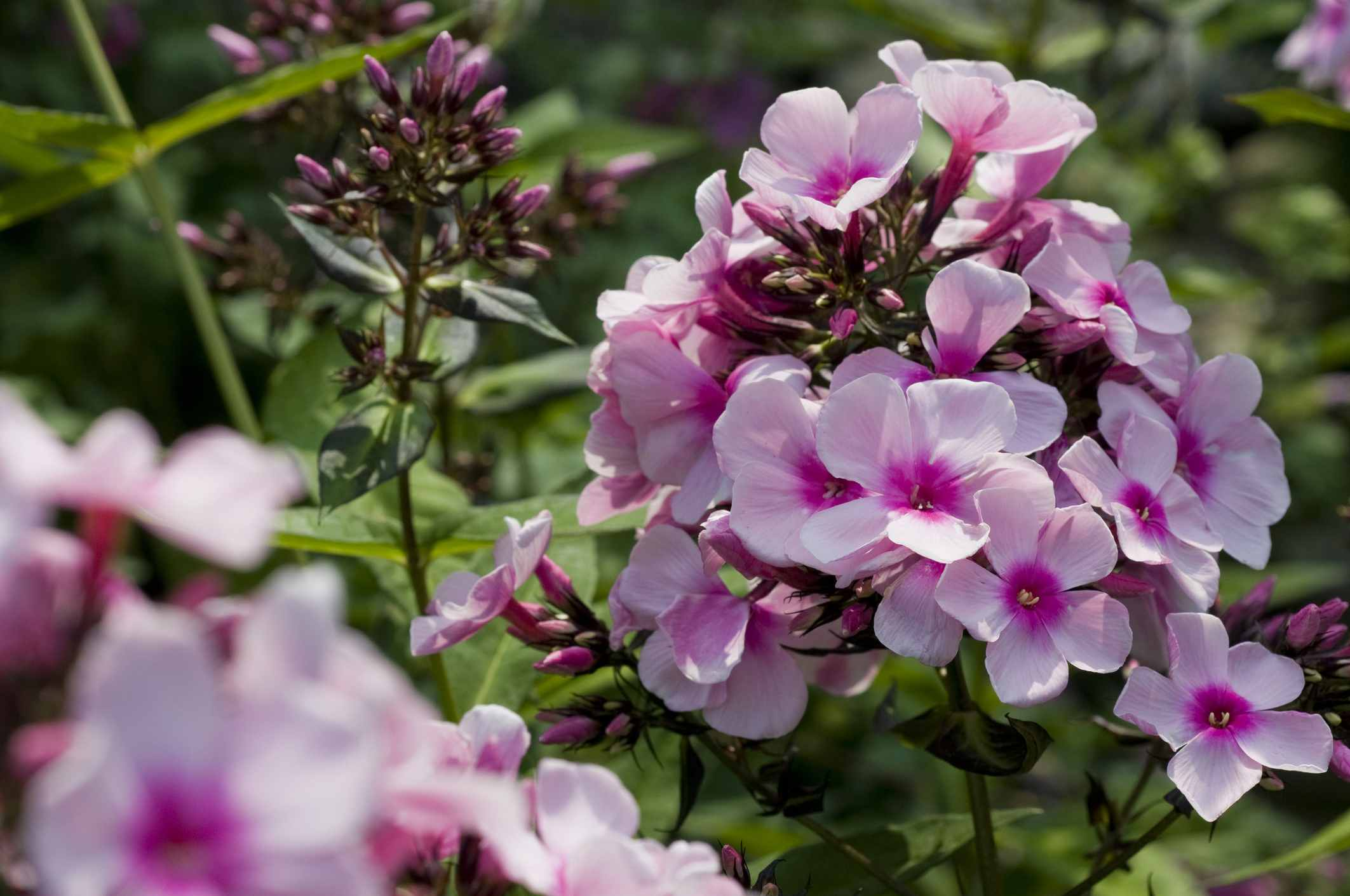 Best Flowers For Allergy Sufferers