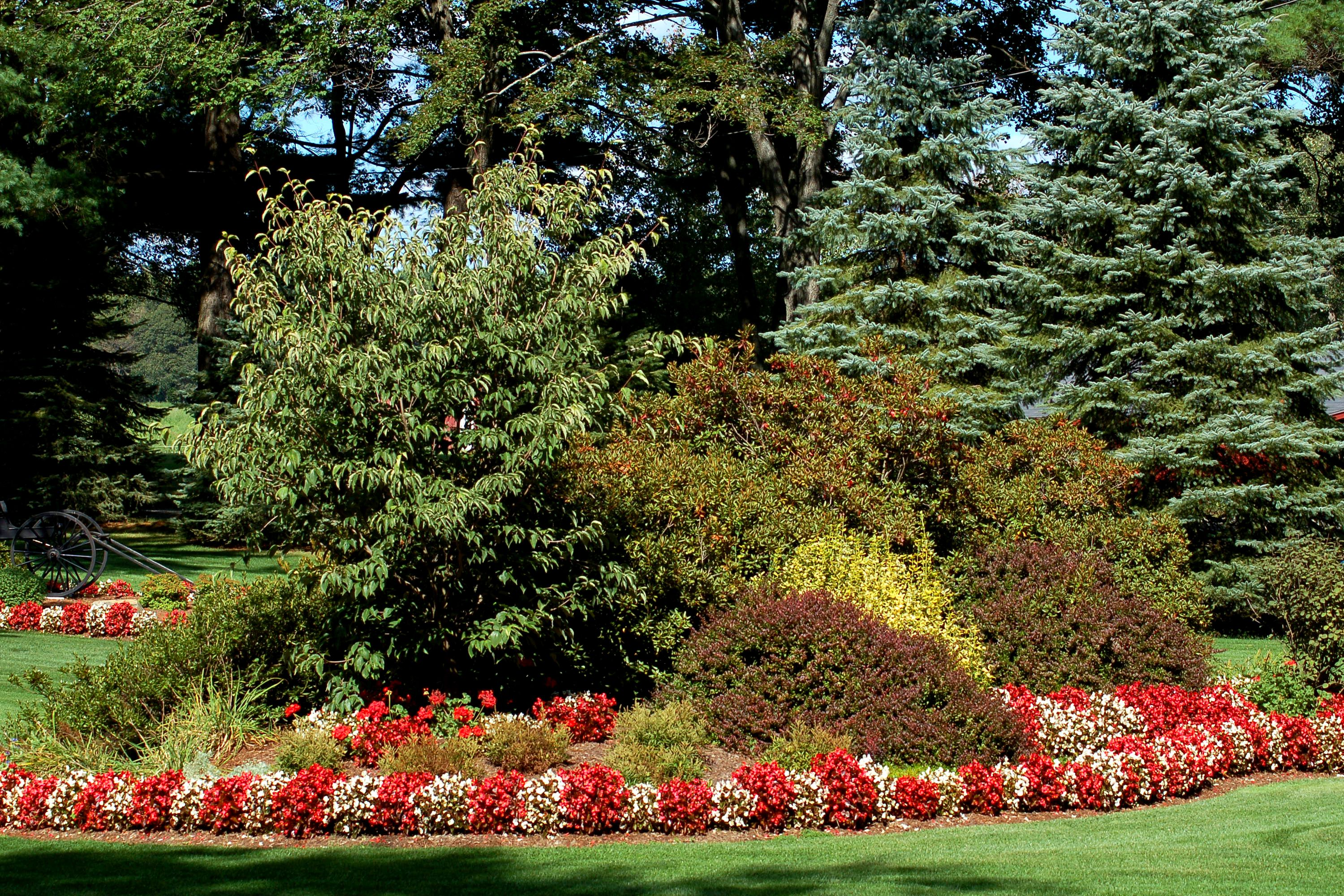 Begonias used to edge a border. The flowers are red and white.