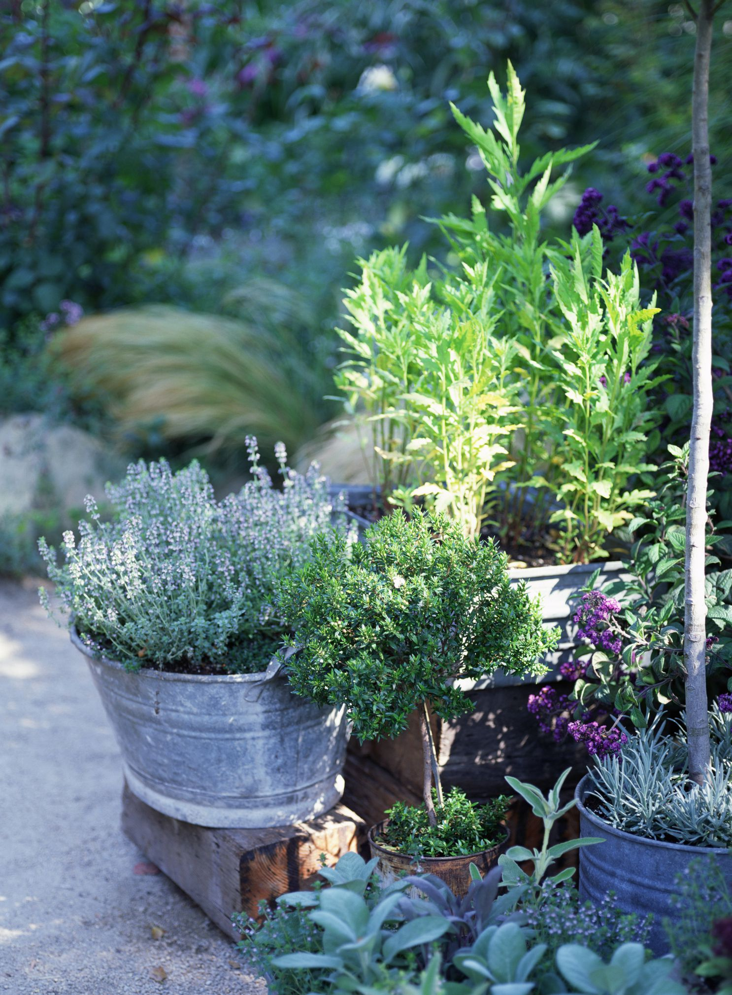 How To Container Garden The Essentials
