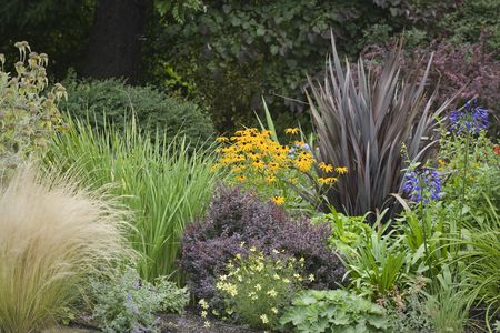 landscape with ornamental grasses - 12 Ornamental Grasses That Will Stop Traffic