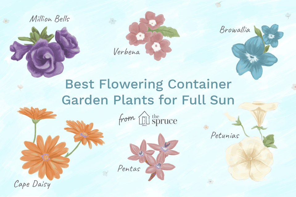 Illustration of best flowering container garden plants for full sun