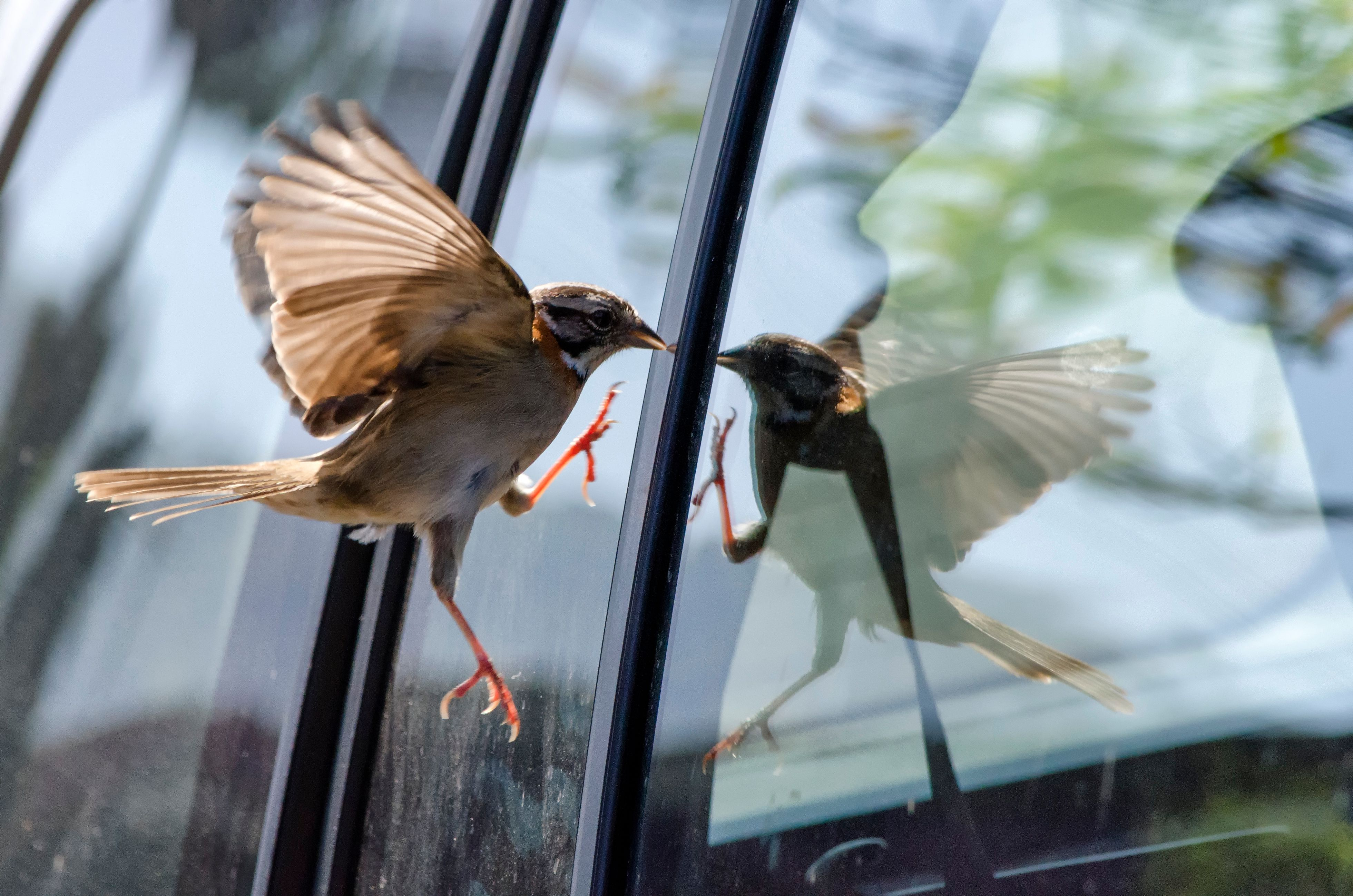 Stop Birds Hitting Windows - 5 Tips to Protect Our ...