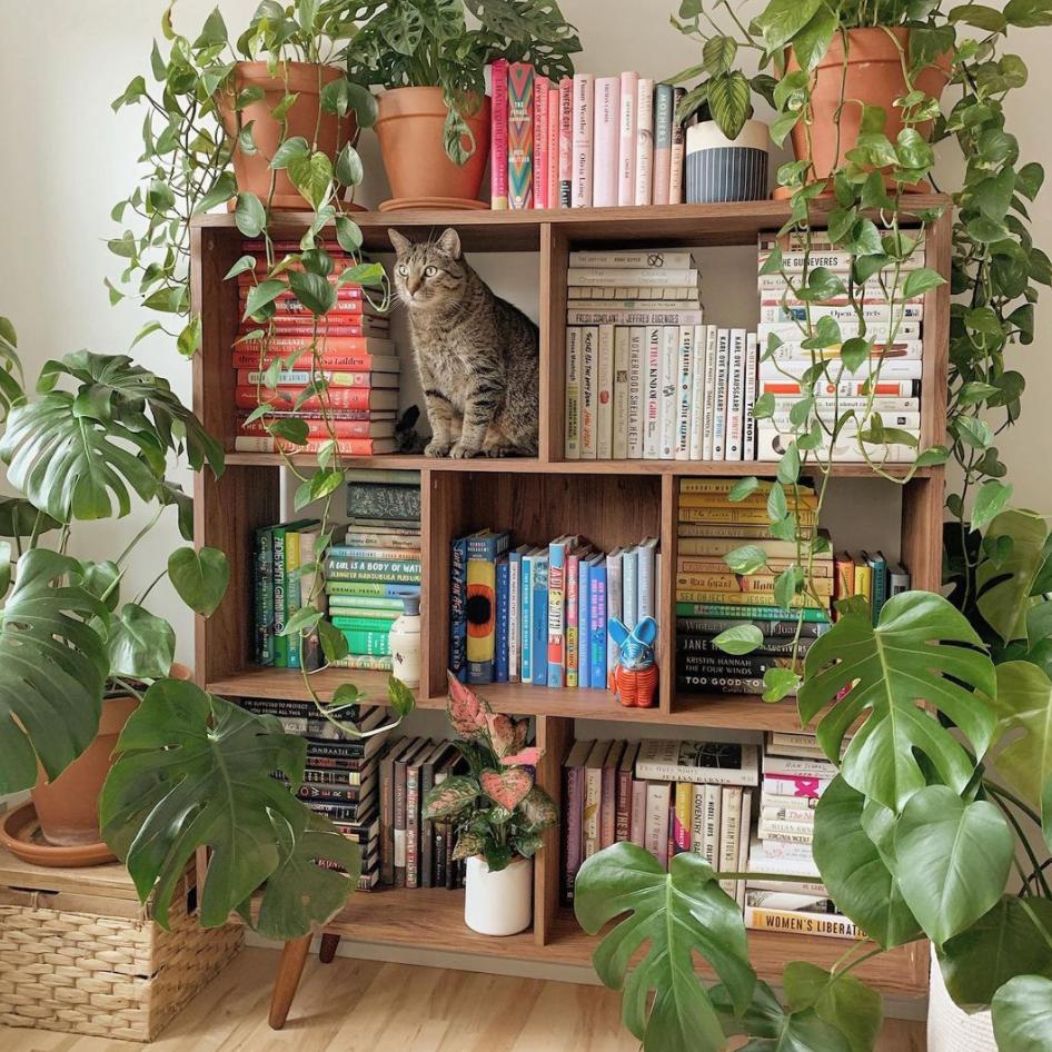Sisilia Zheng plant shelf
