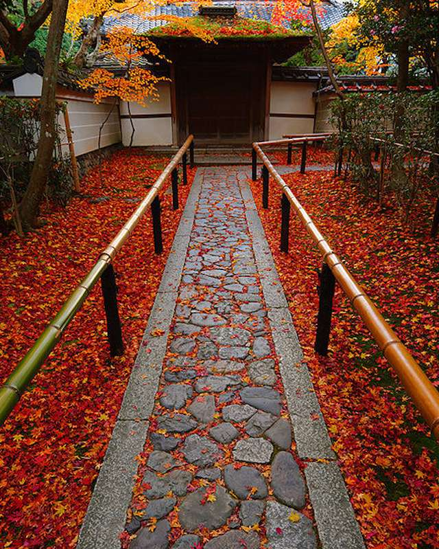 Bamboo fence flanking stone path with bright red maple leaves leading to a Japanese house entrance