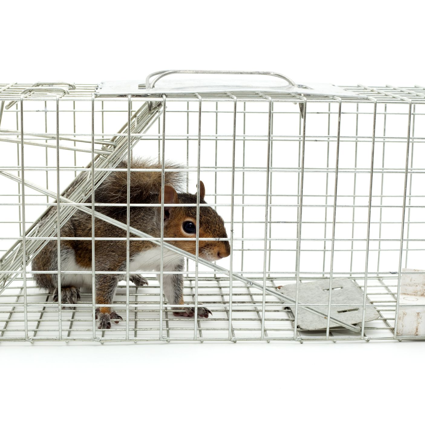 best 25 brd cage decoraton deas on pnterest.htm squirrel damage and how to control it  squirrel damage and how to control it