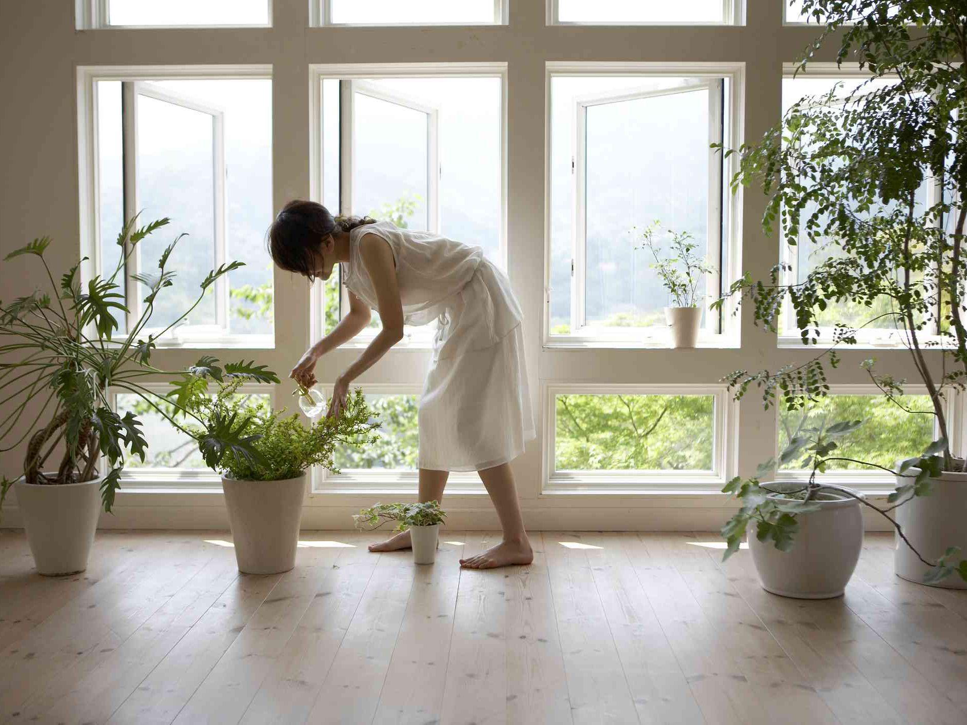 Super Good And Bad Feng Shui Plants Download Free Architecture Designs Saprecsunscenecom