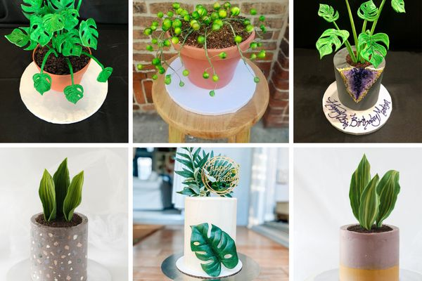 planty cake collage. Cakes that look like monsteras, string of perals, and snake plants