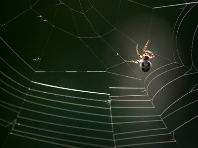 40 Effective Tips For Control Of House Spiders Awesome How To Get Rid Of Spiders In Bedroom