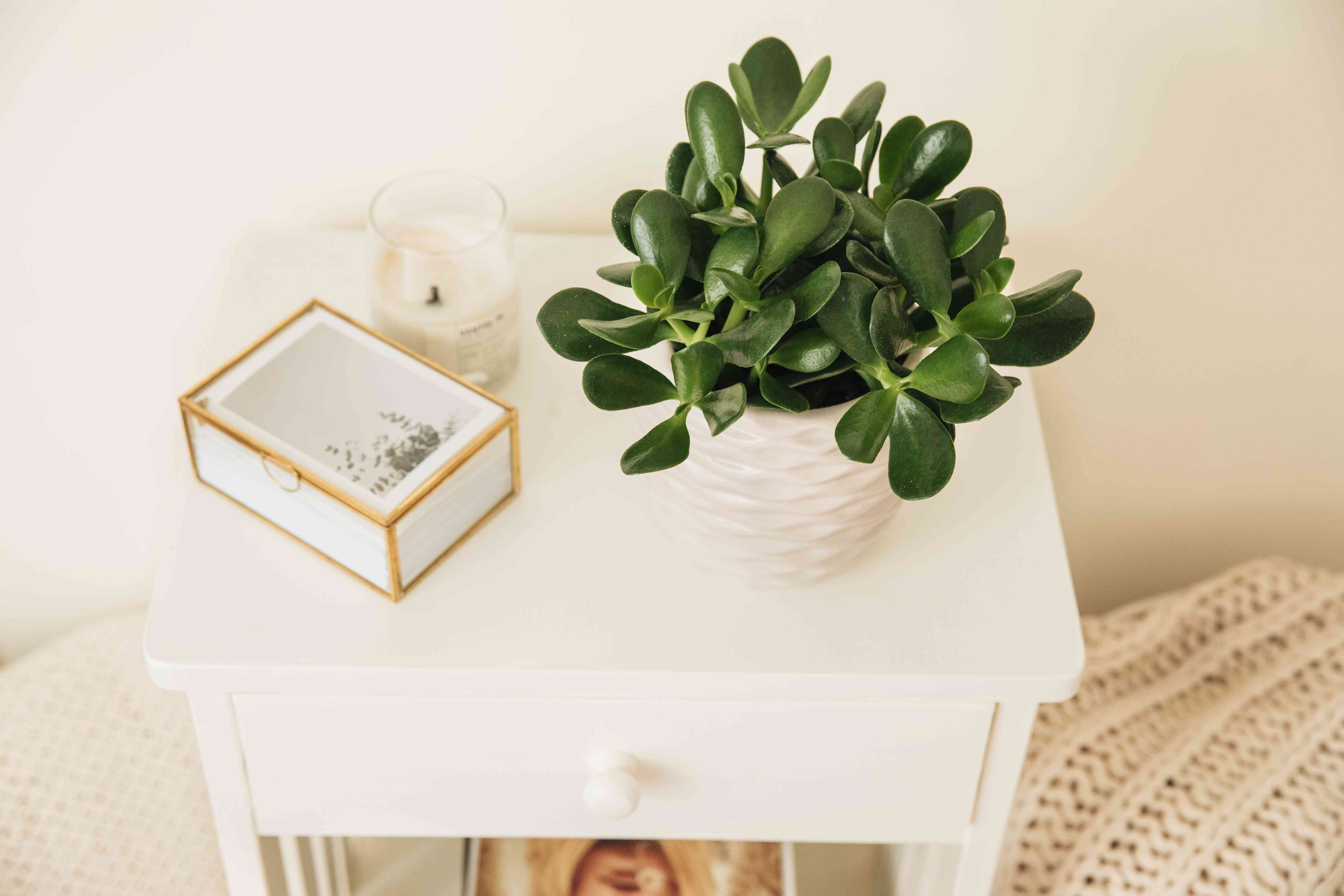 jade plant on a nightstand