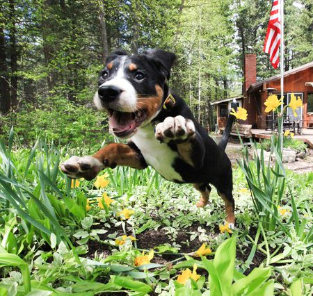 keep dogs out of flower gardens
