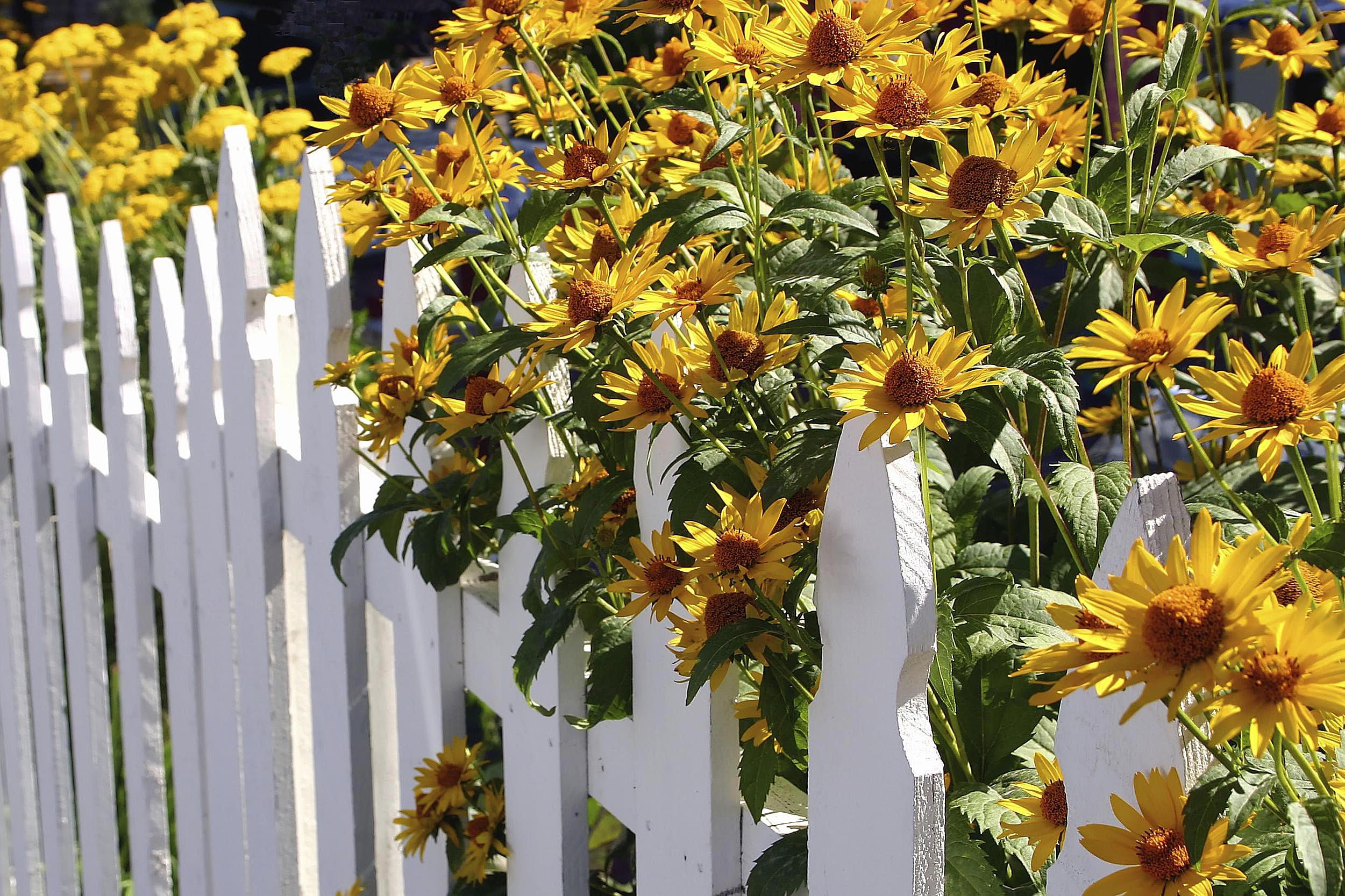 Growing Perennial Flowers From Seed