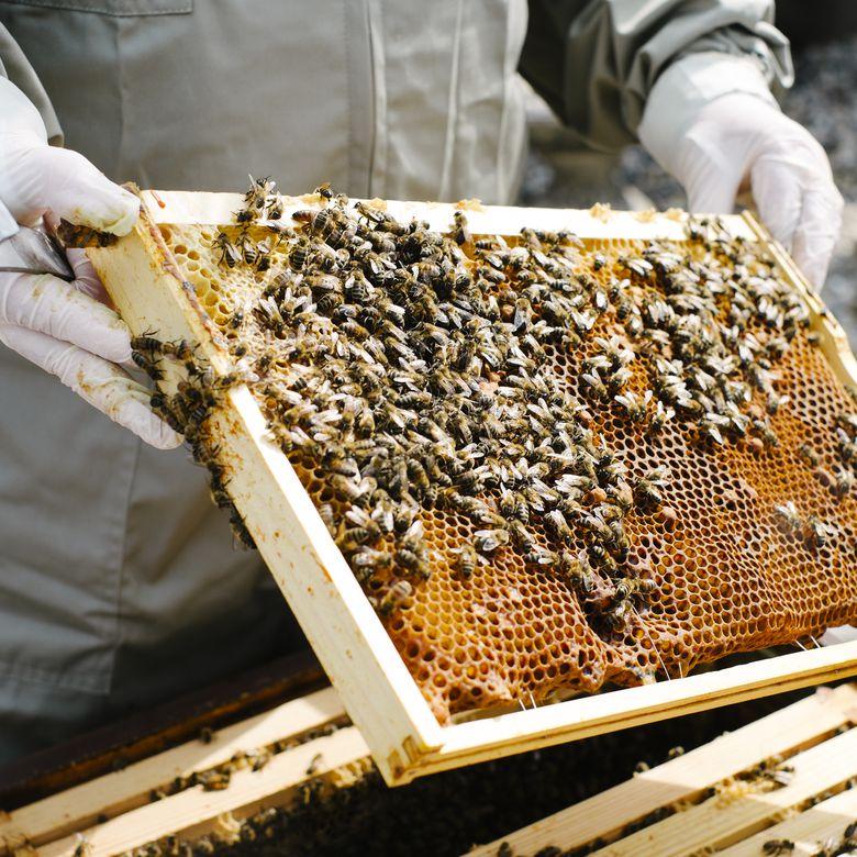 Bee keeper working in his garden
