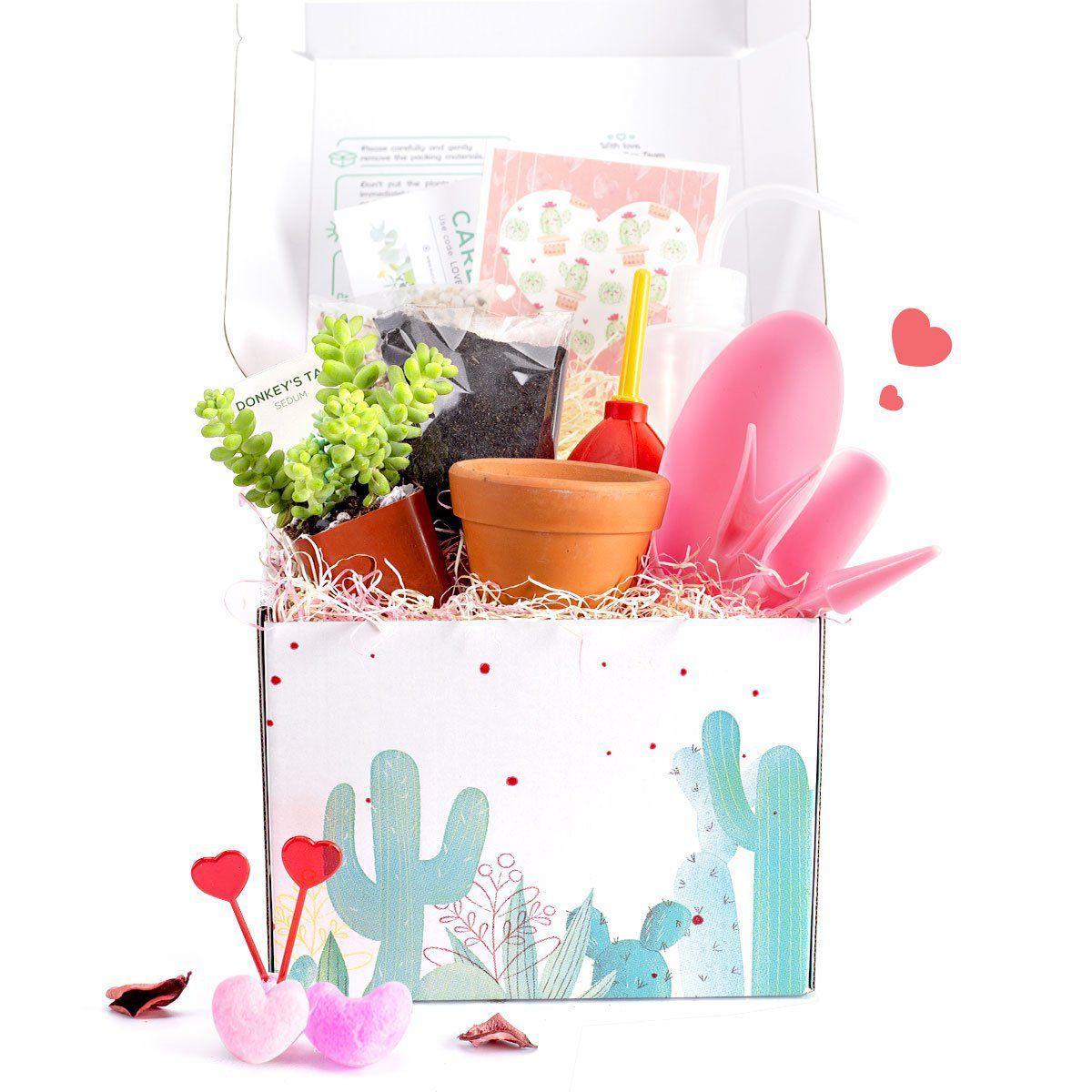 Succulents Box