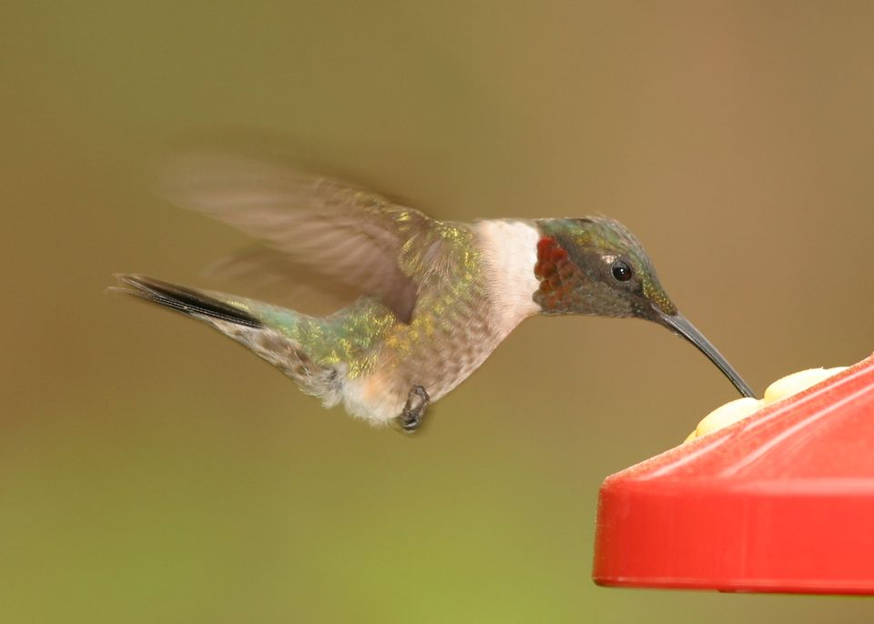 A colorful hummingbird drinking out of a feeder.