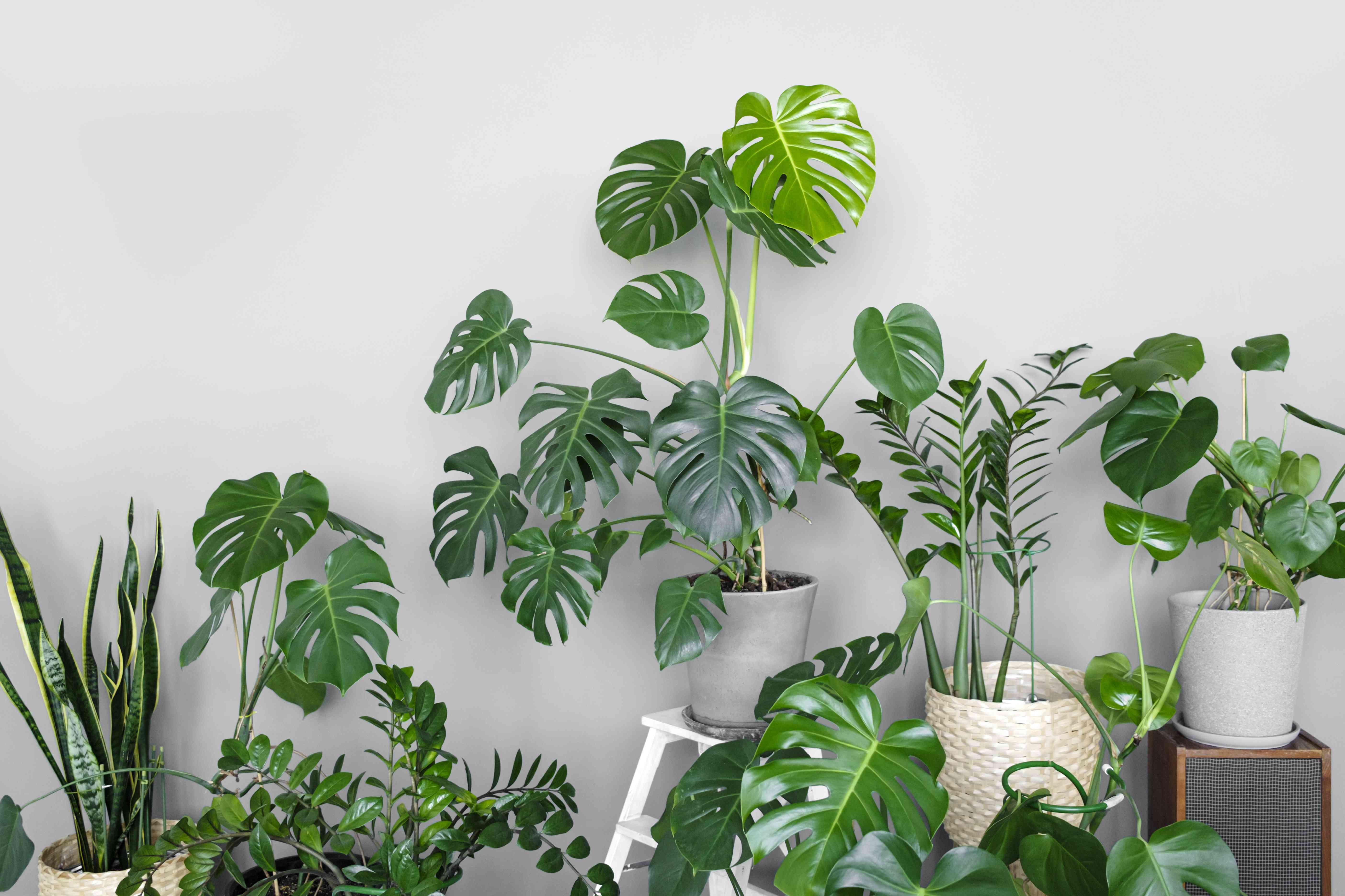 A collection of house plants in front of a white wall.