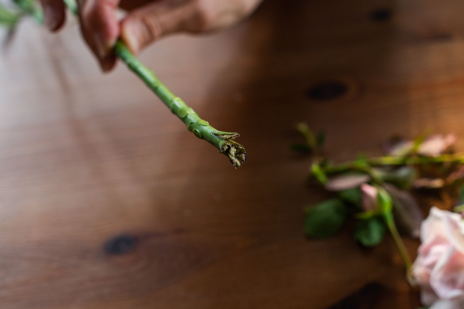 Preparing a rose cutting for rooting