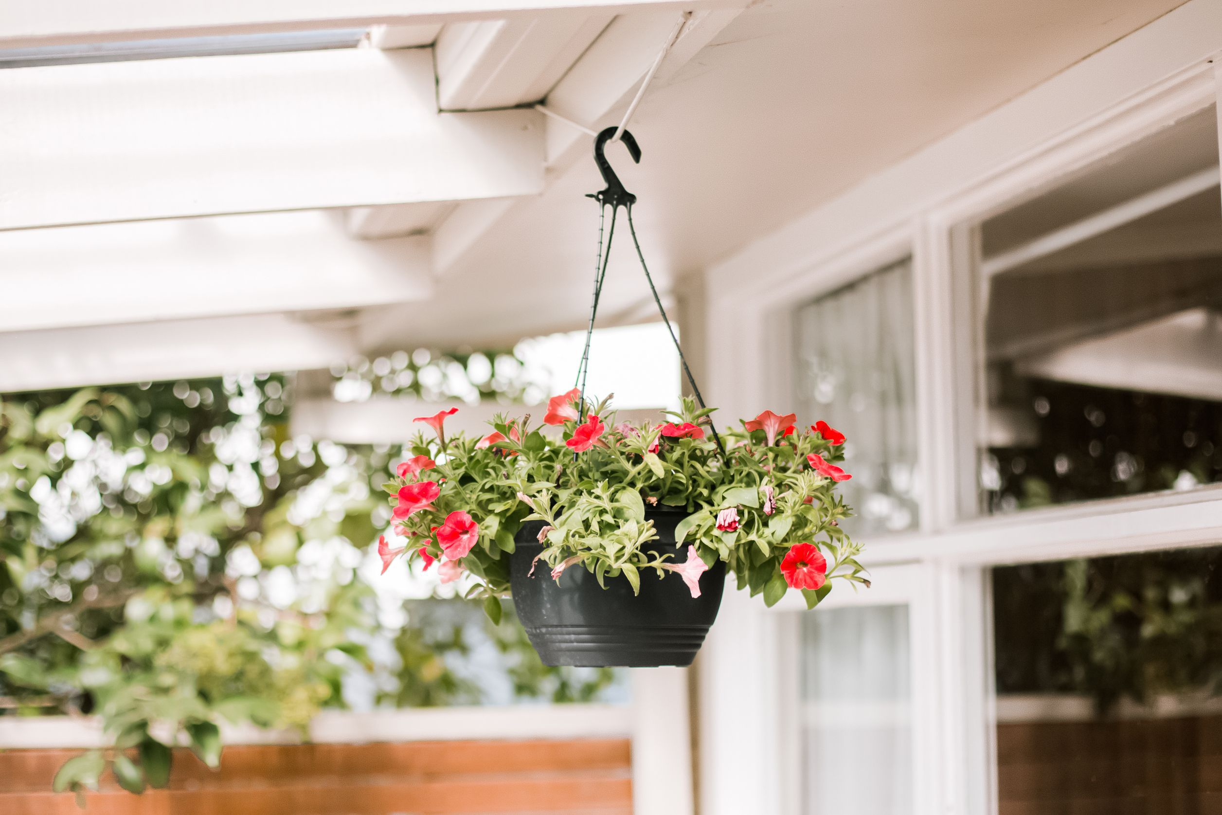 10 Best Flowers For Hanging Baskets