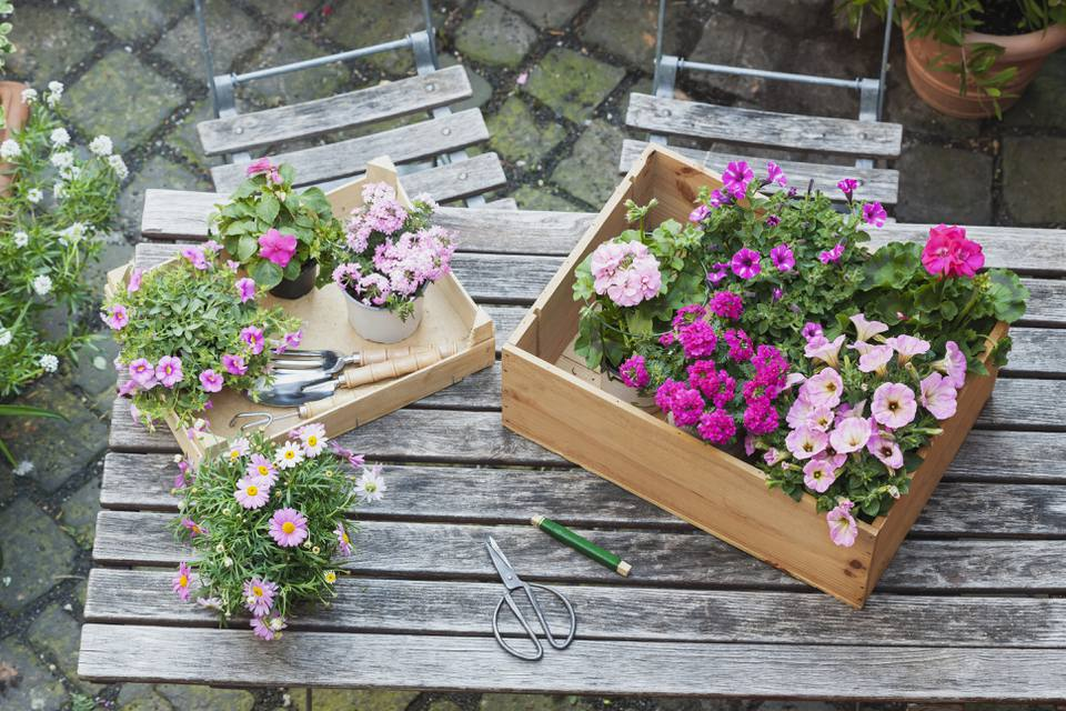 Gardening, planting of summer flowers