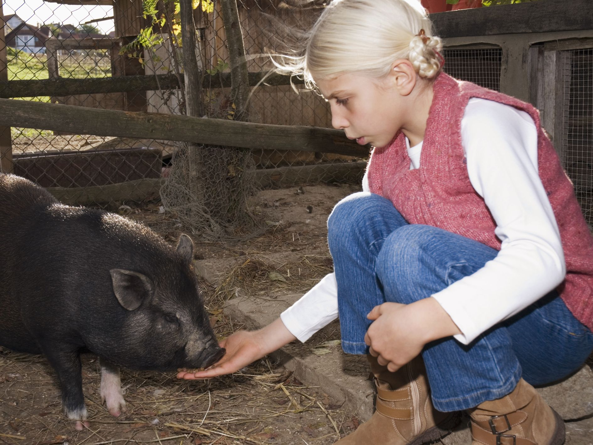 How to Socialize and Bond with Baby Pot Bellied Pigs