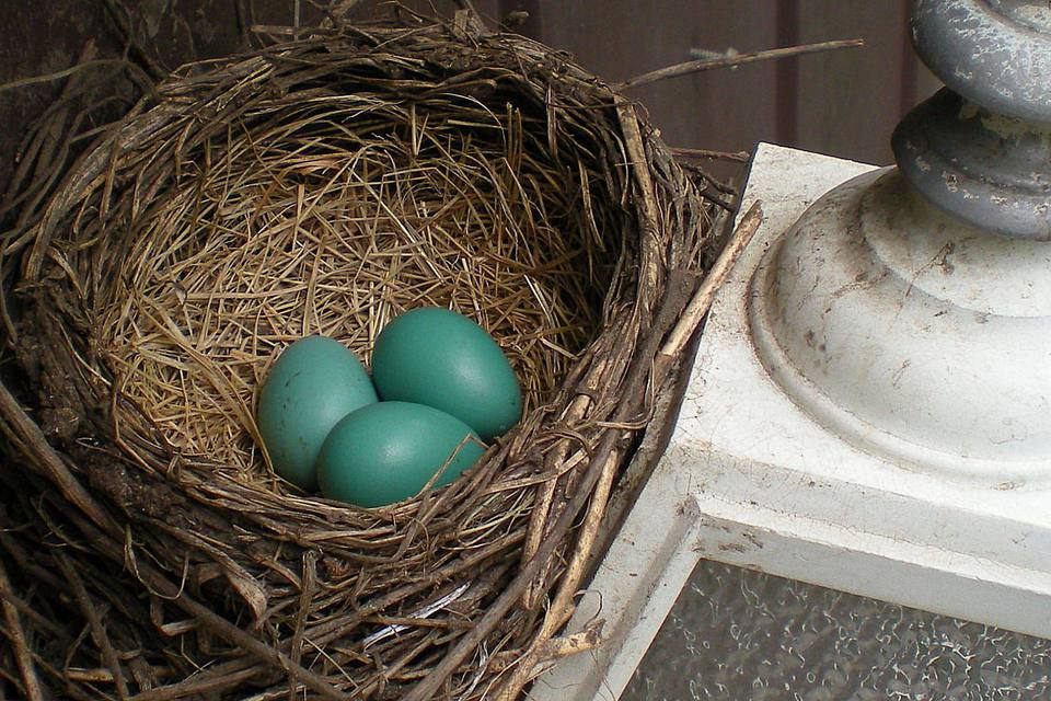 Nest on a Porch Lamp