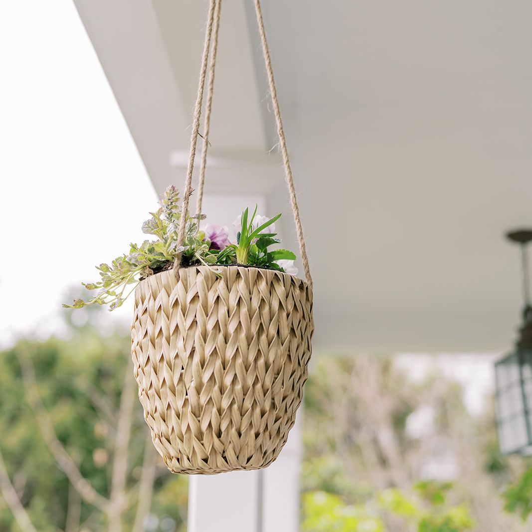 finding lovely hanging plants