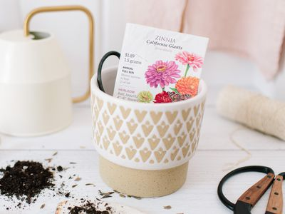 items for planting zinnia seeds