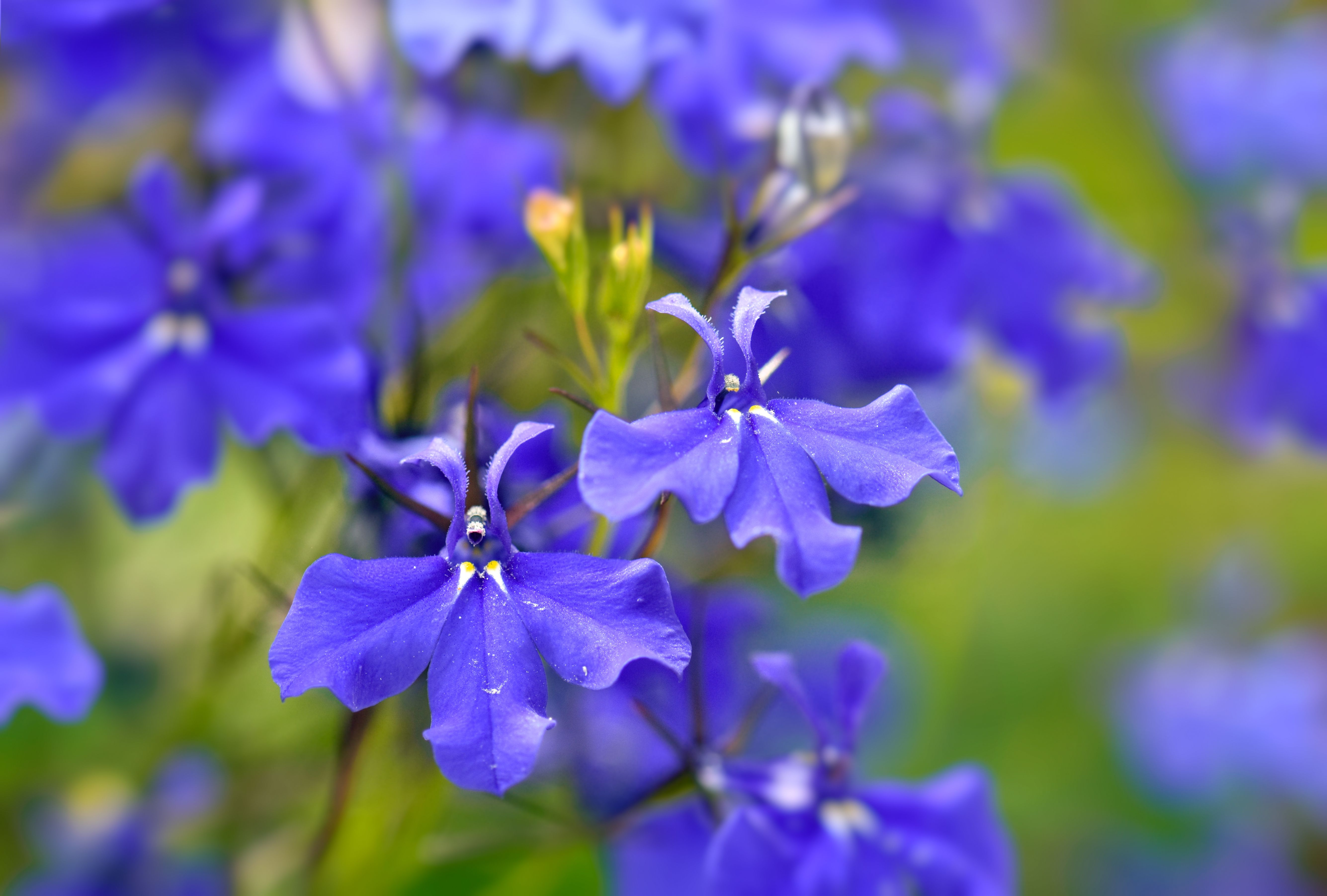 Annual Flowers For Dry Shade Areas