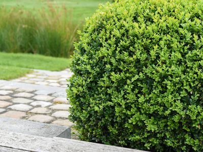 14 Best Low Maintenance Ground Covers For The Landscape